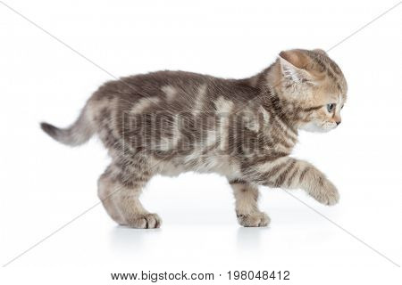 Afraid kitten cat side view