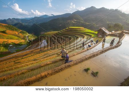 Mu Cang Chai, VietNam, 24 May 2017 : Farmers of Hmong preparing transplant in water season, Mu Cang Chai , Vietnam