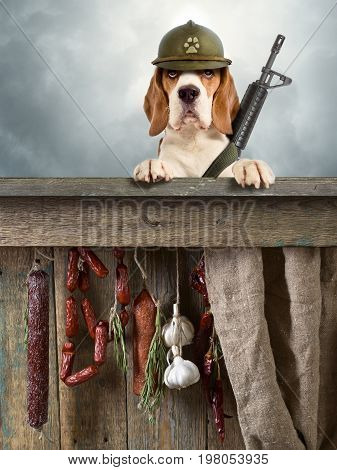 The sentry dog with gun in a helmet very attentively observes. The dog is guarding the sausage.
