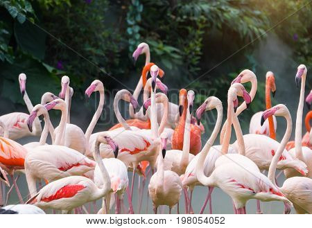 Flamingo birds standing in lake