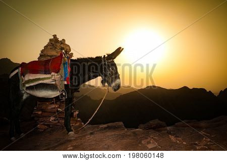 lonely donkey in mountains of Jordan with sunset in background