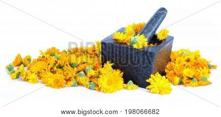Calendula flowers in a stone mortar isolated healthcare theme