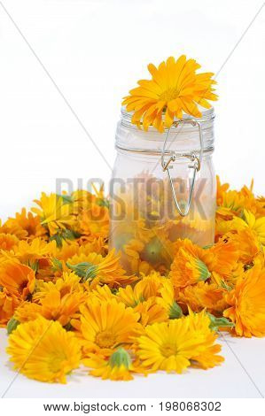 Calendula flowers herb bloom isolated healthcare theme