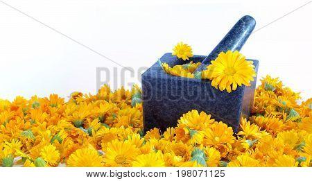Calendula flowers medicinal plant isolated healthcare theme