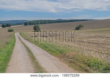 An unpaved road. It runs through the fields. On the fields the corn is mown, they are brown in color. The area is undulating. Growing clumps of green deciduous trees. It is sunny day.
