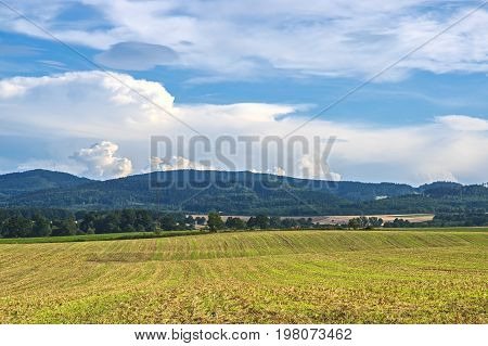 Extensive cereal crop field. Cereal is ripe, full of grains, straw has yellow color. It is sunny day. In the distance you can see a forest covered hill. The cumulomibbles are floating above the hill. It is sunny day.
