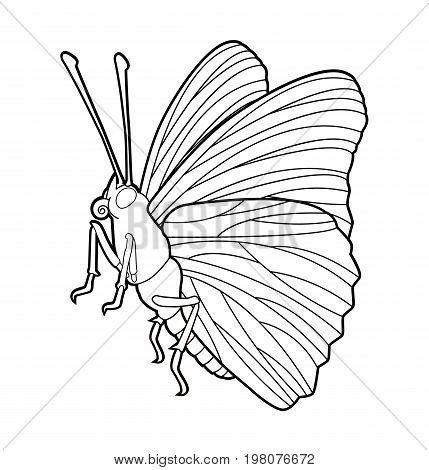 Butterfly - insect line drawing collection for design and scrapbooking