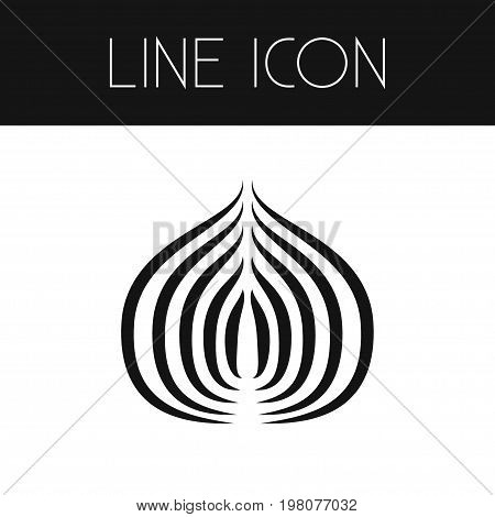 Spice Vector Element Can Be Used For Bulb, Spice, Vegetable Design Concept.  Isolated Vegetable Outline.