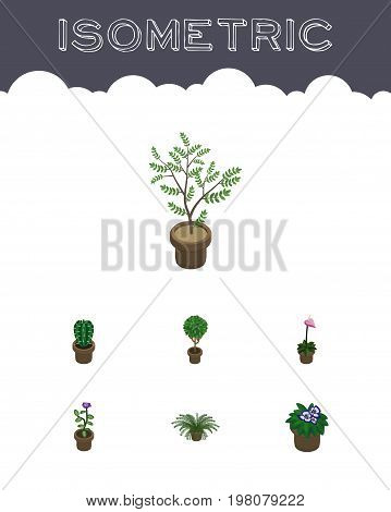Isometric Flower Set Of Plant, Flowerpot, Grower And Other Vector Objects