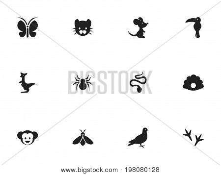 Set Of 12 Editable Animal Icons. Includes Symbols Such As Footprint, Arachnid, Serpent And More