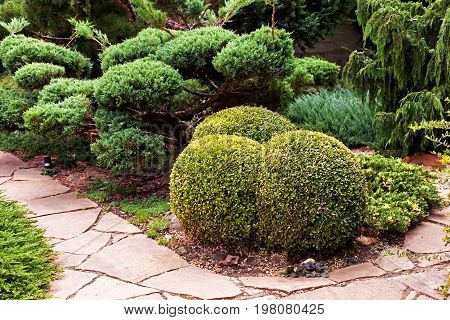 The Boxwood Is Trimmed In The Shape Of Ice Cream Balls. Landscape Design