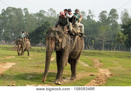 Chitwan National ParkNepal - April 15 2014: Elephant ride for tourists