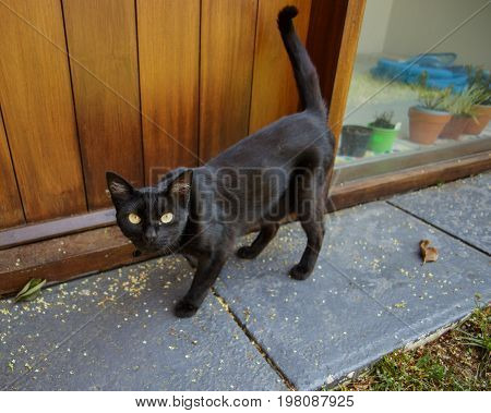 Curious black cat outside by the doorstep