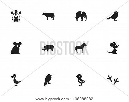 Set Of 12 Editable Zoology Icons. Includes Symbols Such As Kine, Mouse, Crow And More