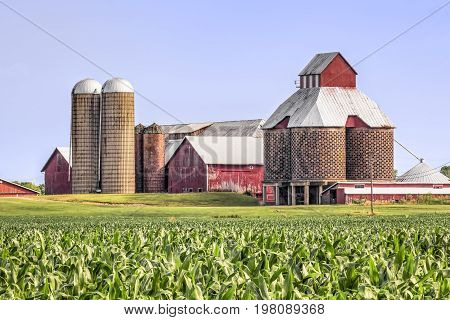 A cornfield is backed by red barns with several interesting silos in rural Ohio USA.