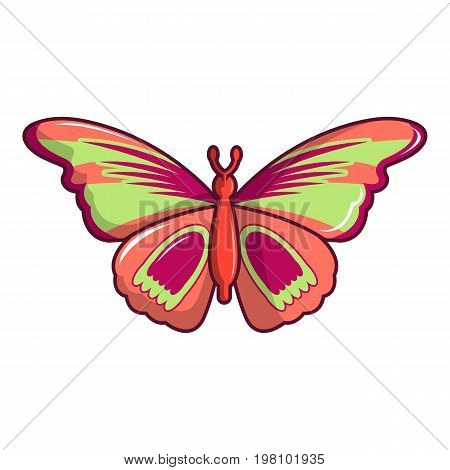 Butterfly archippus sangaris icon. Cartoon illustration of butterfly archippus sangaris vector icon for web design