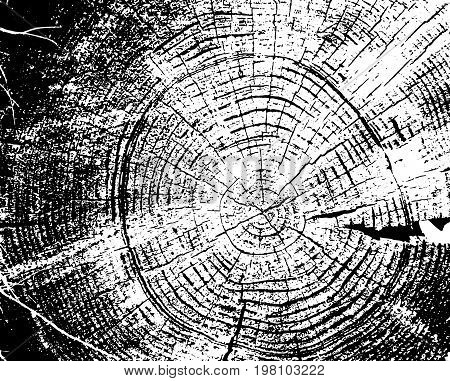 Wood grunge texture. Natural isolated background. Vector illustration. Wooden rings