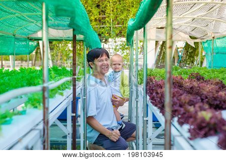Asian Father and son harvesting organic vegetable in greenhouse of Hydroponics green vegetable garden Selective focus at baby face