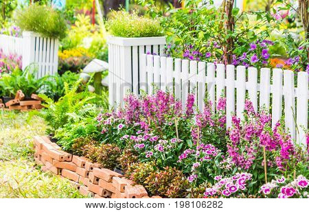 White picket fence surrounded by flowers in front garden on summer.