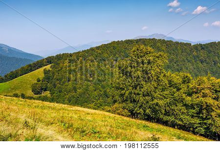 Forest On Hills Of Mountain Ridge In Autumn