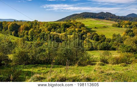 Forest And Meadow On Hills In Mountainous Countryside