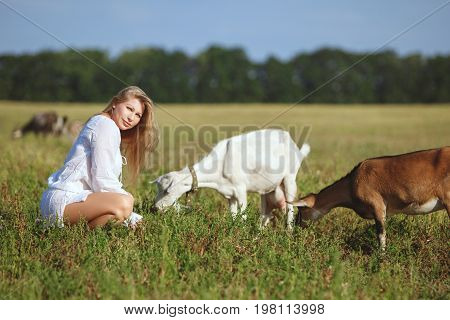 Woman feeds goats in the field a summer bright day.
