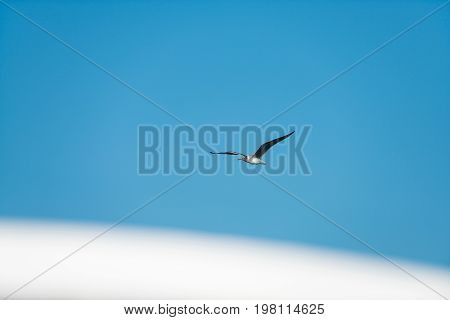 Seagull white bird with gray wings soaring flying high in blue summer sky on natural background freedom and calm concept