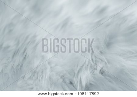 Closeup Fur. Softly Gentle Smooth Calm And Subtle Detail Emotional Concept.