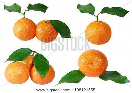 Set of tangerine fruits isolated on white background