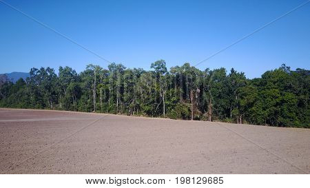 Deforestation. Rainforest cleared for agriculture. Environmental damage to forest trees