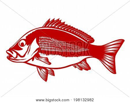 Red Snapper 2 Red