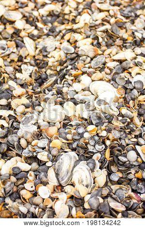 texture seashells, seashell background, sea collection nature