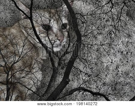 Cat and dead trees - Concepts of ghost, evil, Halloween, Friday the 13th; double exposure. Copy space for text is on the right.
