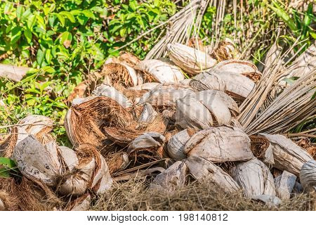 Abstract Shot Of Coconut Shells And Palm Trees