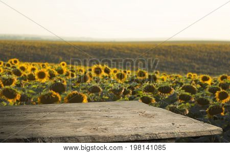 sunflower seeds in sack. Sunflower seeds in burlap bag on wooden table with field of sunflower on the background. Sunflower field with blue sky. Photo with copy space area for a text.