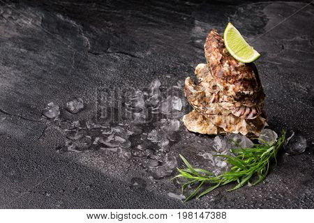 Close-up of large juicy oysters with a lime segment on top. Fresh sea mollusks full of nutrients on a black background. Close seashells with glistering ice cubes and bright herbs. Copy space.