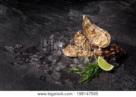 A composition of exotic oysters on a black table background. Fresh sea mollusks with crushed ice cubes, tarragon herbs and a piece of sour lime. Expensive and tropical delicasy food. Copy space.