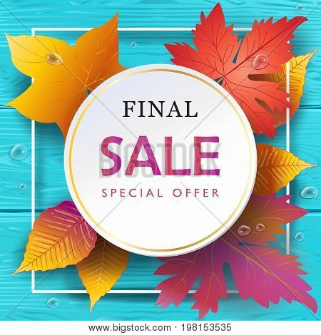 Autumn Final Sales banner, Sale Vector illustration. Fall sales season gift card with realistic drawing maple leaves, leaf fall on turquoise color wood texture, water drops, top view wooden table background