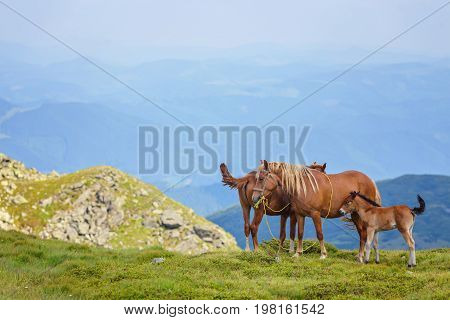 Horses In The Green Foothills