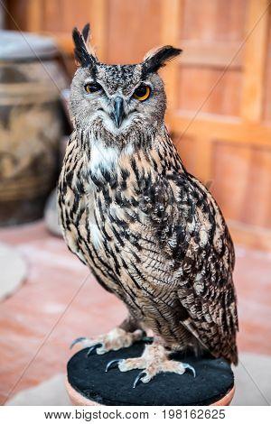 owl night bird in the forest, freedom animal