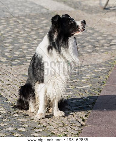 Street Dog, lovely animal and pet in the garden