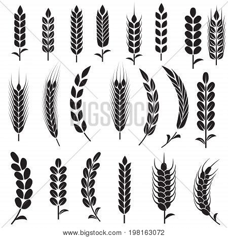 Wheat Ears Icons and Logo Set. For Identity Style of Natural Product Company and Farm Company. Organic wheat bread agriculture and natural eat. Contour lines. Flat design.