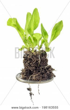 Plants Are Growing On A Coin, Isolated On White Background