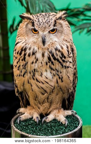 owl night bird in the forest, pet and animal