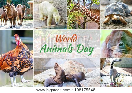 World Animal Day. Collage with different animals.