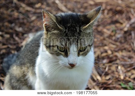 Cat looking interested against wood chip background