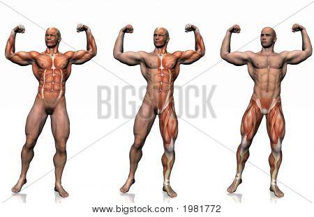 Anatomie van de mens.
