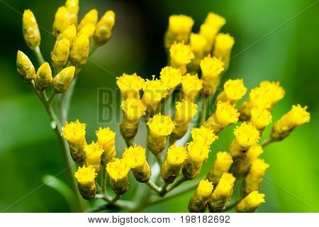 Macro Photography Of Small Yellow Flowers