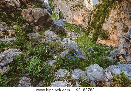 Mountain canyon and rocky valley on the pathway to Lovchen national park. Wilderness area wide panoramic view with wild flowers and foothills. Kotor, Montenegro.