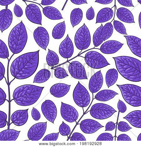 Seamless pattern of beautiful purple birch, honeysuckle leaves, twig, branches, sketch style vector illustration on white background. Hand drawn honeysuckle twig seamless pattern